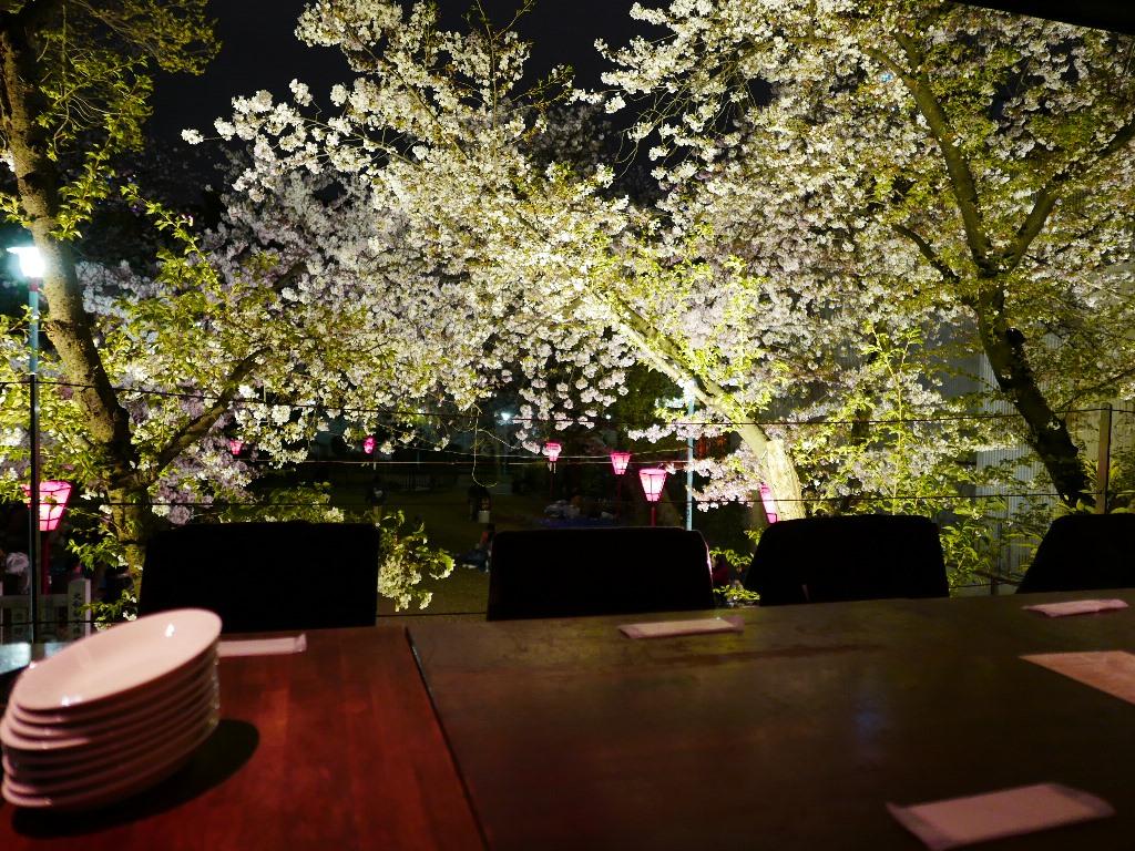 Mのディナー 満開の桜が目の前に見える特等席で美味しい料理が楽しめるカフェ! 中央区高津 「グローブカフェ」
